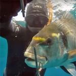 Video Pescasub: la Grossa Orata nella Tana in bassofondo