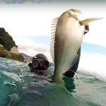 Video Pescasub: l'Oratona Gigante tra Torbido e Risacca (8 kg)