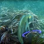 Video Pescasub: la Grossa Orata Sembrava Catturata e Invece…