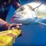 Video Pescasub: Tiro Perfetto alla Grossa Orata