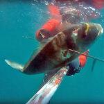 Video Pesca Sub: Una Grossa Orata nel Torbido (6 kg)