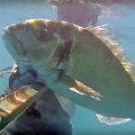 Video Pescasub: l'Orata all'Agguato, Strisciando nell'Ombra