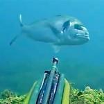 Video Pescasub: la Grossa Orata e l'Attimo Perduto