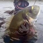 [Video] Pescasub Barracuda e Orata: Oro e Argento di Marzo – ISTANTI dal BLU ep.8