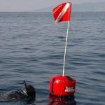 Obbligo della Boa segnasub per il subacqueo