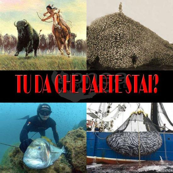 pescasub-indiani