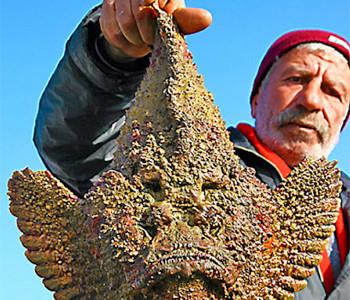 Le 4 Specie di Pesci Alieni che Minacciano il nostro Mediterraneo