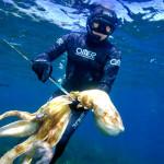 Normativa: Polpo e Molluschi Cefalopodi Vietati al Pescasub. Di Nuovo?!