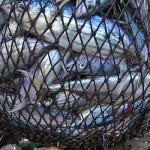 Ecco come la Pesca Professionale Vive quasi Solo di Sussidi