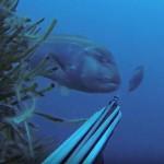 Video Pescasub: Grosso Dentice inaspettato e Quasi Coppiola