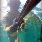 Video Pesca Sub: una Grossa Sorpresa Mimetizzata sul Fondo