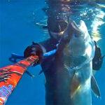 Video Pesca Sub: una Grossa Ricciola a 4 Metri di Profondità