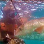 Video Pesca Sub: Tiro Perfetto sulla Grossa Ricciola