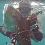 Video Pescasub: l'Enorme Ricciola nel Sottocosta (44 kg)