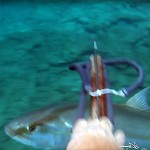 Video Pescasub: la Grande Ricciola troppo Curiosa (46 kg)