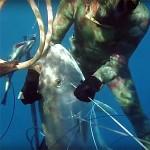 Video Pescasub: l'immensa Ricciola catturata Partendo da terra (48 kg)