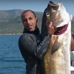 Video Pescasub: la Ricciola da oltre 60 kg in Caduta