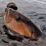 Video Pescasub: la Ricciola che Tentò di Rubare la Palamita dall'Asta ma…
