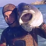 Video Pescasub: la Grossa Ricciola in Caccia e il Tiro in Caduta