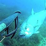 Video Pescasub: Enorme Ricciola di 70 kg pescata all'aspetto