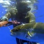Video Pescasub Profonda: la Ricciola del Relitto – ISTANTI dal BLU ep.1