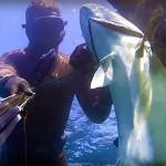 Video Pescasub: La Grande Leccia in mezzo ai Cefali