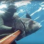 Video Pescasub con gli agonisti: Sebastiano Rosalba e il Cernione inaspettato