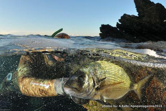 Molti neofiti sono convinti a torto che per prendere pesce occorra scendere a fondo