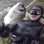 Video Pescasub: Agguato al Grosso Sarago in 50 cm d'Acqua