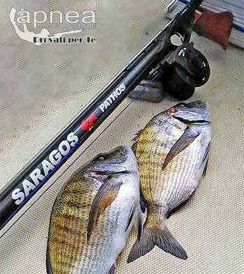 saragos pesca AR