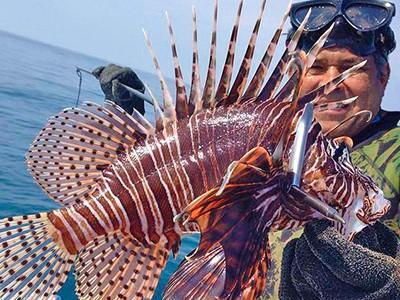 È Allarme: Il Velenoso Pesce Scorpione è Arrivato anche in Italia
