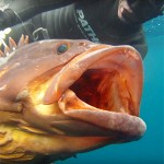 The Search: la nuova video serie di Pathos Pro Spearfishing