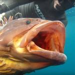 The Search: la nuova video serie di Pathos Pro Spearfishing