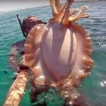 Video Pescasub: la Seppia Gigante sulla Sabbia (5 kg)