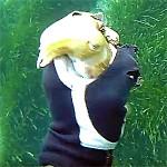 Video Pescasub: Si può catturare una Seppia con le Mani?