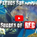 """Shades of Red"", a caccia di Dentici e Pagri con Pathos Pro Spearfishing"