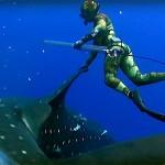 Video Pescasub: mentre pescano Tonni spunta il Gigante dei mari
