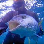 Video Pesca Sub: Ricciola, il Sogno che si Avvera (42 kg)