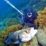 Qual è il Reale Impatto della Pescasub sulla Spigola?