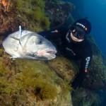 UE shock sulla Spigola: Divieto di pesca fino al 30 giugno a Nord del 48°