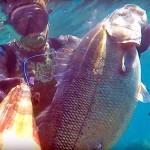 Video Pescasub: l'Enorme Spigola Kamikaze