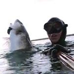 Video Pescasub: Quando RINUNCIARE alla Grossa Spigola Ovata è Facile