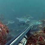 Video Pescasub: Le Spigole in Frega e la Scelta che Non Tutti Farebbero…