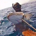 Video Pescasub: In Caduta sulla Grossa Spigola (7 kg)