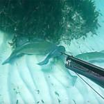 Pesca Spigola: Perchè Cacciarla Durante la Riproduzione e Piangersi Addosso? (1a parte)
