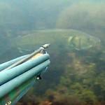Video Pescasub Spigola: Questione di Riflessi e un Pizzico di Fortuna