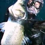Video Pescasub: la Grossa Spigola che risale dal fondo