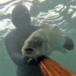 Video Pescasub: una Spigola Troppo Spavalda