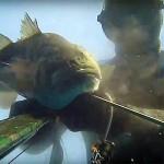 Video Pescasub: la Grossa Spigola sotto il Ciglio