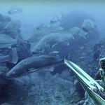"""Video Pescasub: il Branco di Ombrine nello Spot """"Vergine"""""""